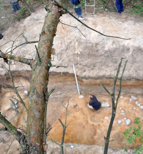 """Kartais dėl mokslo tenka ir į medį palipėti (arba """"Kai dar nebuvo dronų""""). Fotografas nežinomas"""